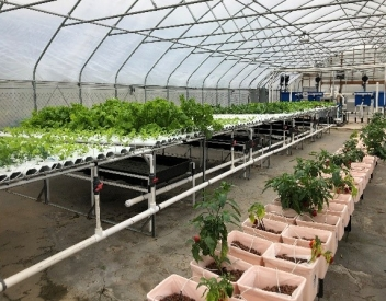Fellowship At Udc Center For Urban Agriculture And Gardening